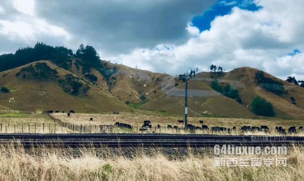 新西兰怀卡托大学排名