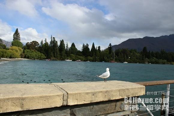 承认高考的新西兰大学