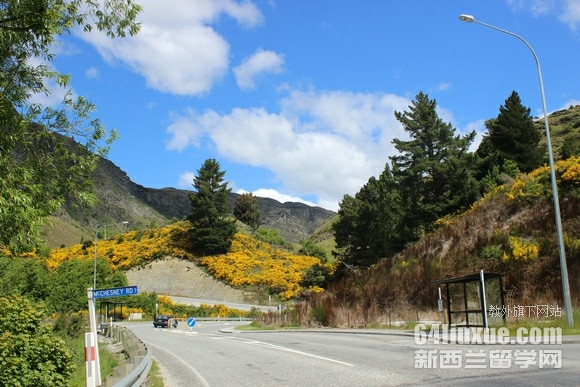 高中新西兰留学费用多少钱