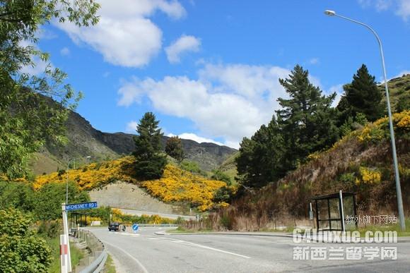 新西兰留学回国工作