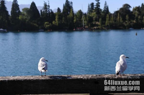 高二学生去新西兰留学