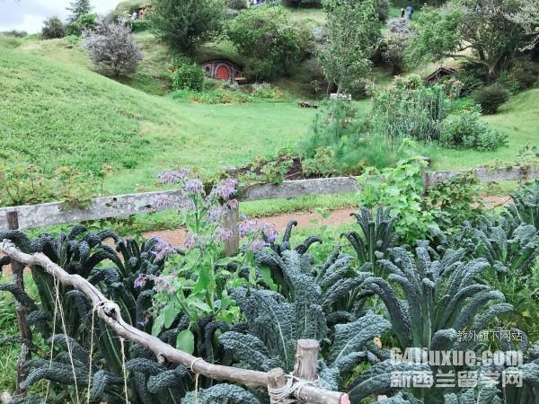 新西兰的园艺专业
