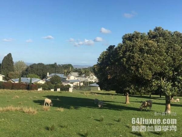 新西兰留学生活费高吗