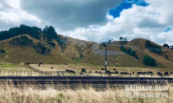 2020新西兰留学陪读