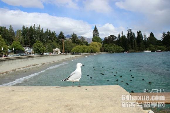 新西兰出国留学读大学